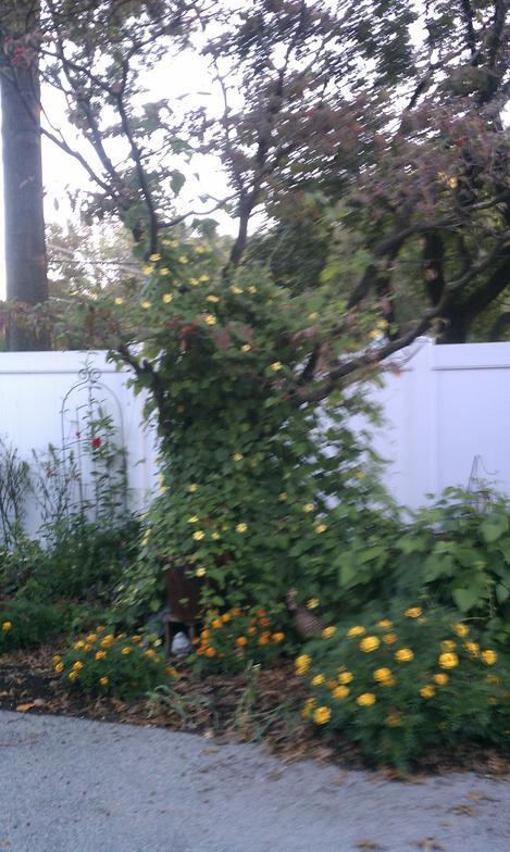 gardening photo gallery